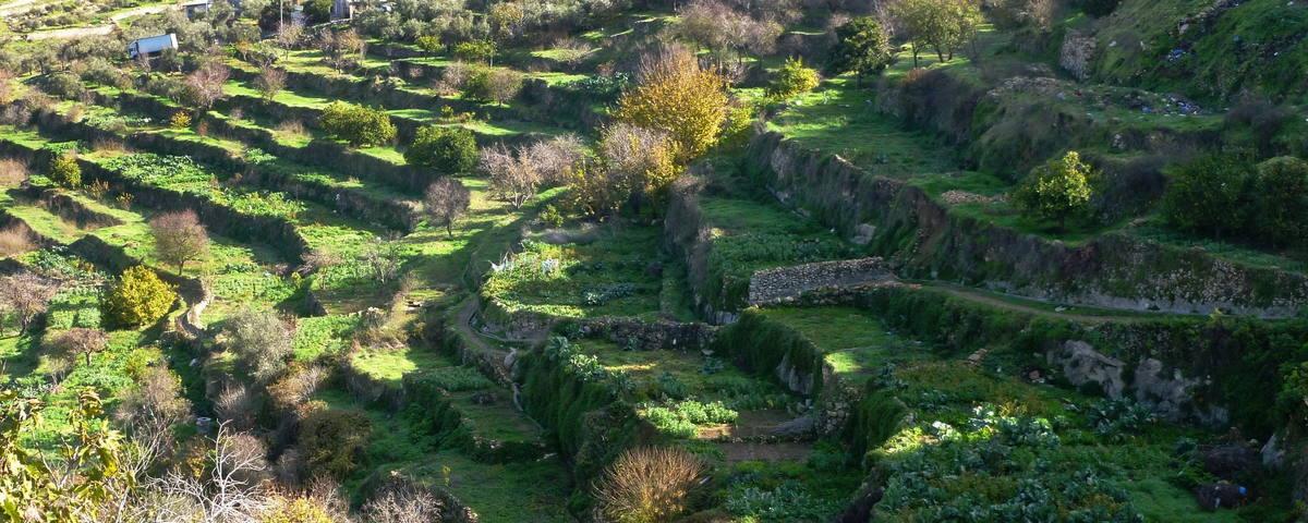 lanskap kebun zaitun di Jerusalem (foto: UNESCO)