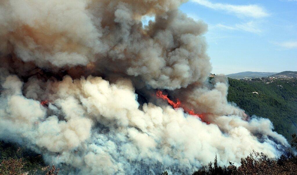 kebakaran hutan di suriah